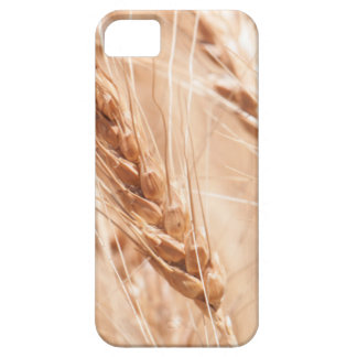 USA, Kansas, Wheat At Harvest Time Case For The iPhone 5