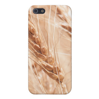 USA, Kansas, Wheat At Harvest Time iPhone 5/5S Cover