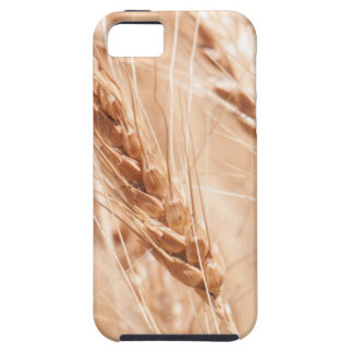 USA, Kansas, Wheat At Harvest Time iPhone 5 Case
