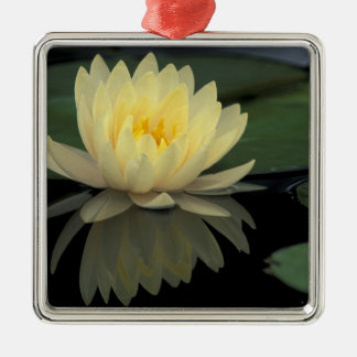USA, Kentucky, Louisville Domestic water lily, Christmas Ornament