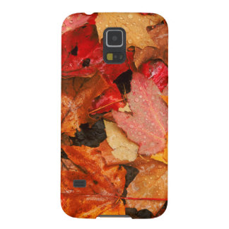 USA, Maine. Autumn maple leaves Galaxy S5 Case