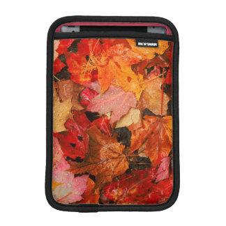 USA, Maine. Autumn maple leaves iPad Mini Sleeve