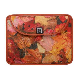 USA, Maine. Autumn maple leaves Sleeve For MacBooks