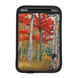 USA, Maine, Wyman Lake. Forest Of Birch iPad Mini Sleeve