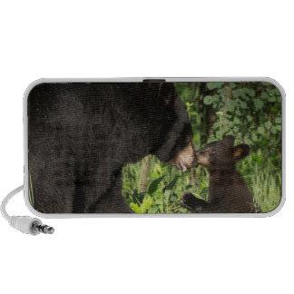 USA, Minnesota, Sandstone, Minnesota Wildlife 13 Speaker System