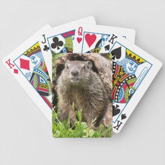 USA, Minnesota, Sandstone, Minnesota Wildlife 15 Bicycle Playing Cards