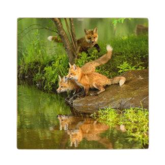USA, Minnesota, Sandstone, Minnesota Wildlife 7 Wood Coaster