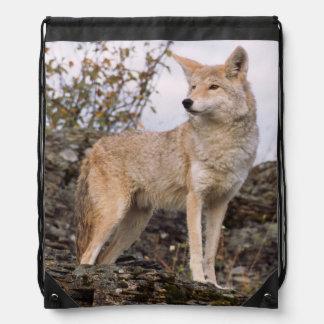 USA, Montana, Kalispell. Coyote at Triple D Drawstring Bag