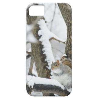 USA, New York, New York City, squirrel sitting iPhone 5 Cover