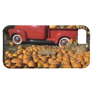 USA, New York, Peconic, pumpkin farm with pickup iPhone 5 Case
