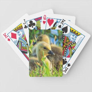 USA, Oregon, Baskett Slough National Wildlife 9 Bicycle Playing Cards