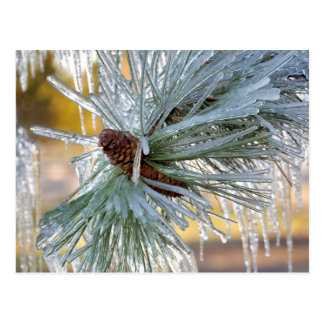 USA, Oregon, Bend. Ponderosa pine needles are Postcard