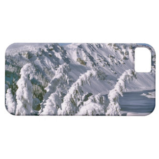 USA, Oregon, Crater Lake NP. Trees bow under the iPhone 5 Covers