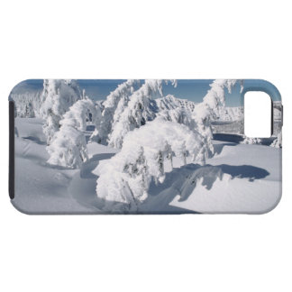 USA, Oregon, Crater Lake NP. Trees droop under a iPhone 5 Cases