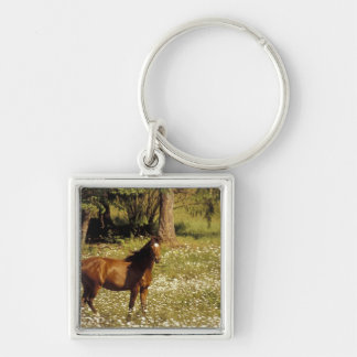 USA, Oregon. Horse in field of daisies Key Ring