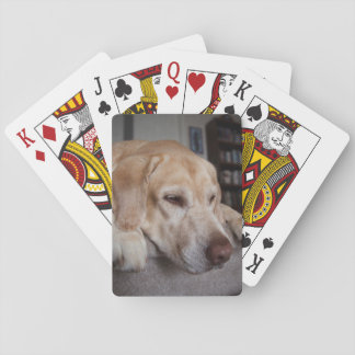 USA, Oregon, Keizer, Labrador Retriever Resting Playing Cards
