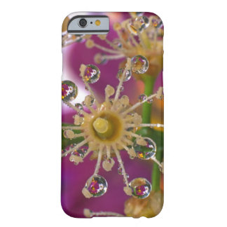 USA, Oregon, Portland. Cosmos flowers reflect in Barely There iPhone 6 Case