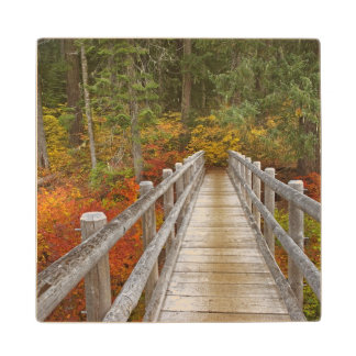 USA, Oregon, Willamette National Forest. Wood Coaster