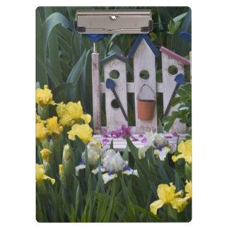 USA, Pennsylvania. Garden irises grow around Clipboards