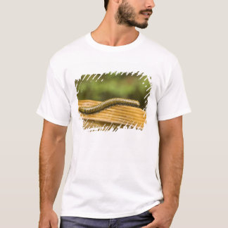 USA, Puerto Rico, Ponce. Millipede. T-Shirt