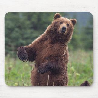 USA, Southeast Alaska, Brown Bear and cub Mouse Pad