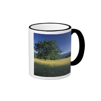 USA, Tennessee. Great Smokey Mountains 3 Ringer Mug