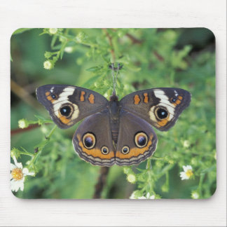 USA, Tennessee, Great Smoky Mountains NP. Mouse Pad