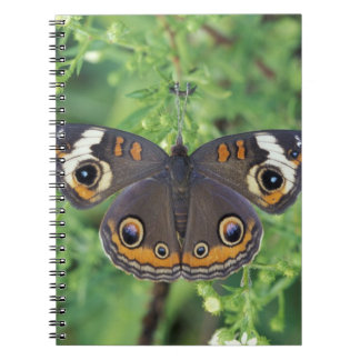 USA, Tennessee, Great Smoky Mountains NP. Spiral Notebooks