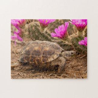 USA, Texas, Hidalgo County. Tortoise Jigsaw Puzzle
