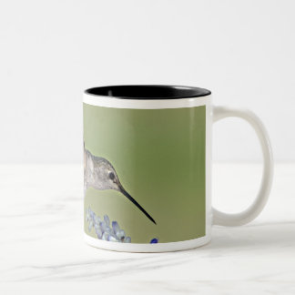 USA, Texas, Hill Country. Female black-chinned Two-Tone Coffee Mug