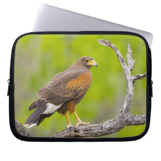 USA, Texas, Mission, Dos Venadas Ranch. Close-up Laptop Sleeve