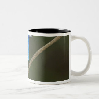 USA, Texas, South Padre Island. Portrait of 2 Two-Tone Coffee Mug