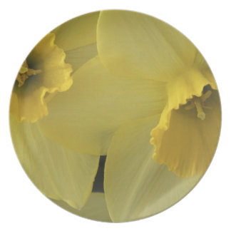 USA, Utah, Cache Valley Daffodils Plate