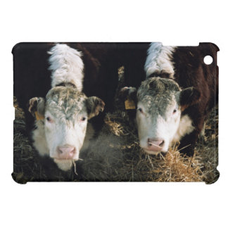 USA, Utah, Cache Valley, Hereford Steers iPad Mini Covers