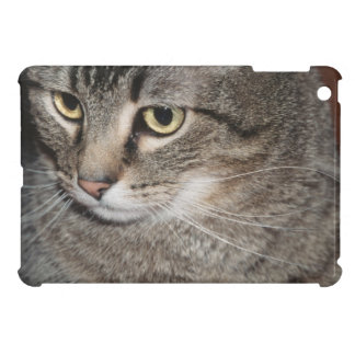 USA, Utah, Close-up of domestic cat iPad Mini Covers