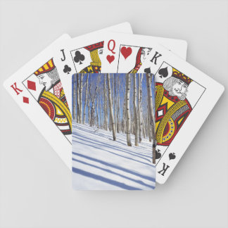 USA, Utah, Dixie National Forest, Aspen Grove Playing Cards