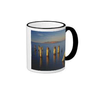 USA, Utah, Great Basin, Saltair, Great Salt Mugs
