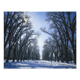 USA, Utah, Salt Lake City, Liberty Park, Photo Print