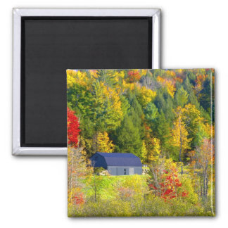 USA, Vermont. Fall foilage along Highway 100. Magnet