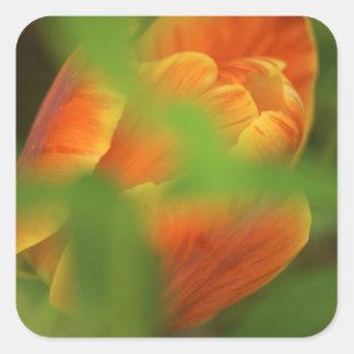 USA, Virginia, Arlington, closeup of orange Stickers
