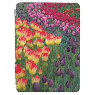 USA, Washington. Blooming Tulips 2 iPad Air Cover
