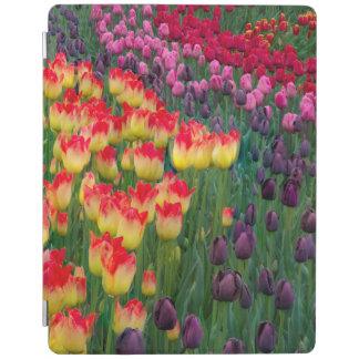 USA, Washington. Blooming Tulips 2 iPad Cover