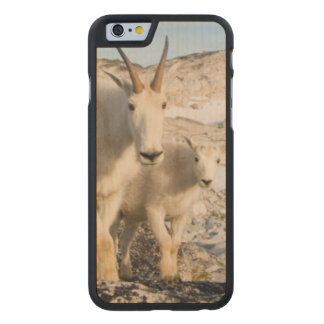 USA, Washington, Cascade Range 2 Carved Maple iPhone 6 Case