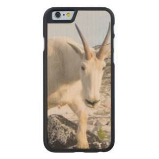 USA, Washington, Cascade Range 3 Carved Maple iPhone 6 Case