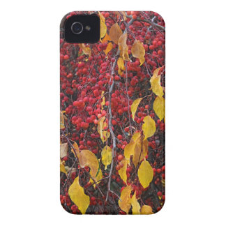 USA, Washington Case-Mate iPhone 4 Case