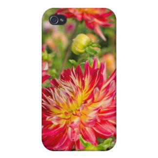USA, Washington. Dahlia Flowers In Garden Case For The iPhone 4