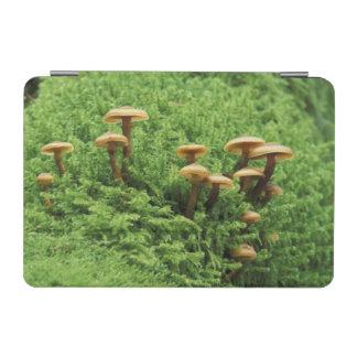USA, Washington. Ferns and mushrooms iPad Mini Cover