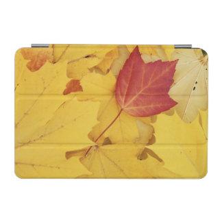 USA, Washington, Finch Arboretum, Red and iPad Mini Cover