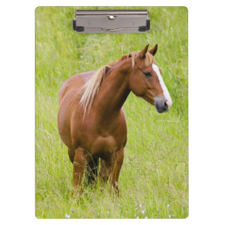 USA, Washington, Horse in Spring Field, Clipboards