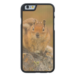 USA, Washington, North Cascades National Park 5 Carved Maple iPhone 6 Case